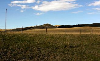 Montana Fatality Review Case